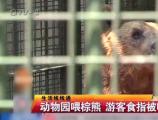 肖京京:违规投喂手被咬,怎能说是熊的错?