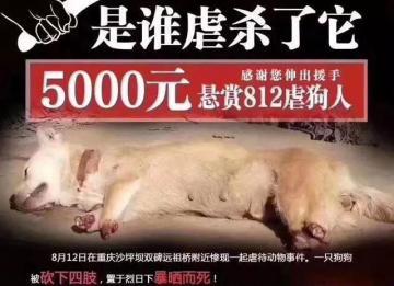 重庆一只狗被砍下四肢暴晒而死,善待动物从你我做起