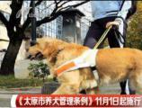 张洪泉:太原最严养狗令应区别对待找好点